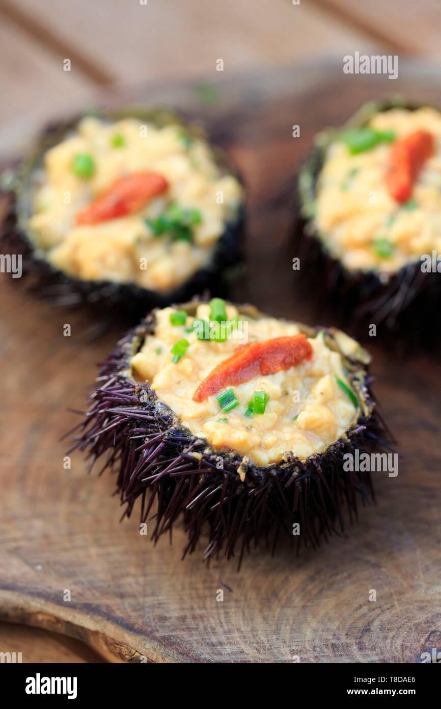 France, Corse du Sud, Freto, Bonifacio, Da Passano, restaurant, sea urchin scramble - Stock Image