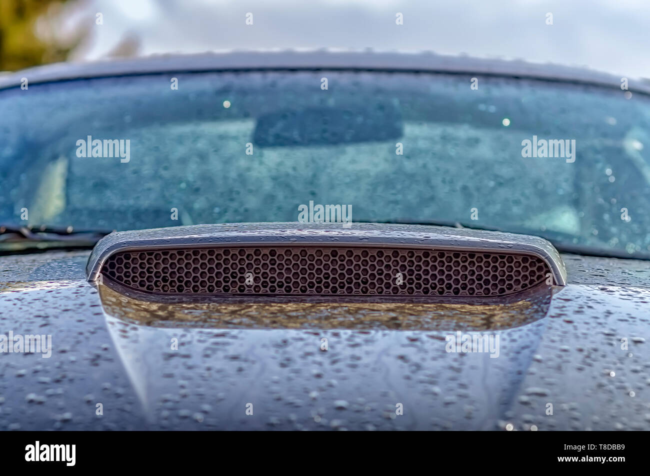 The hood/hood scoop/hood grille insert of a Ford Mustang GT covered in  glistening water droplets after a summer storm. - Stock Image