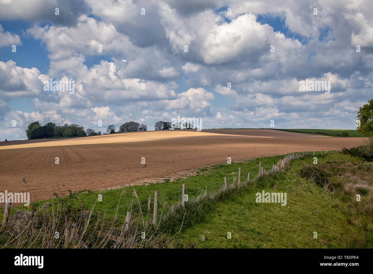 Farmland along the Downs Link path, West Sussex - Stock Image