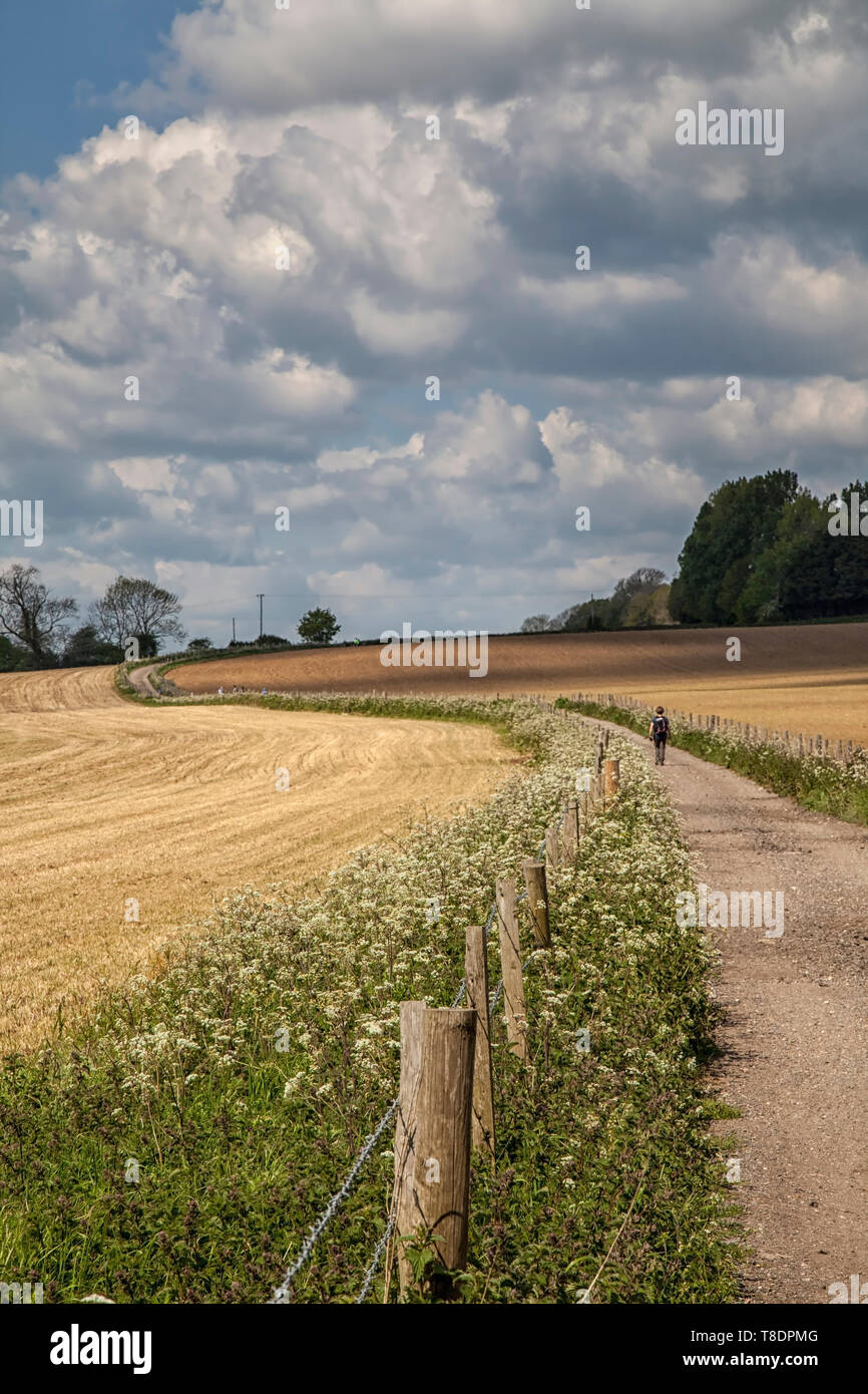 Walkers on the Downs Link, West Sussex - Stock Image