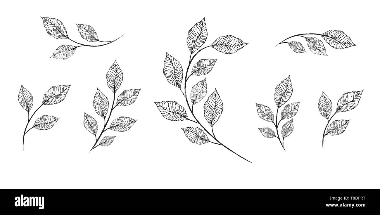 designer elements set collection of greeng leaves herbs - Stock Image
