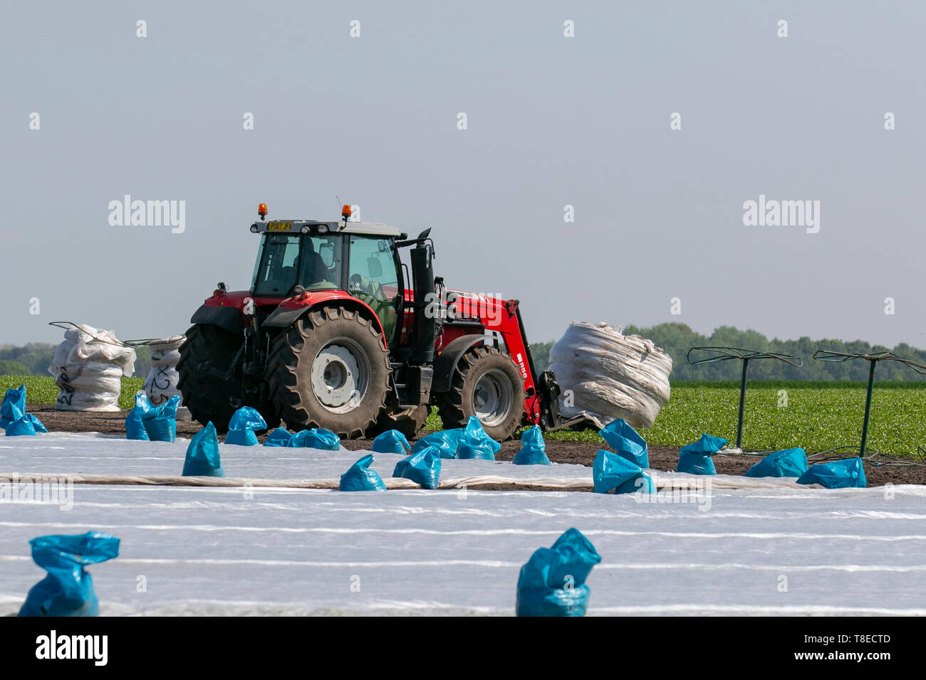 Tarleton, Merseyside. 13th May, 2019. UK Weather. Bright and sunny in the 'Salad Bowl' of Lancashire as the fine dry weather allows farmers access to the drying farmland with their tractors which first till the land, which is then planted with seedlings, and then covered against frosts. Credit: MediaWorldImages/AlamyLiveNews. - Stock Image