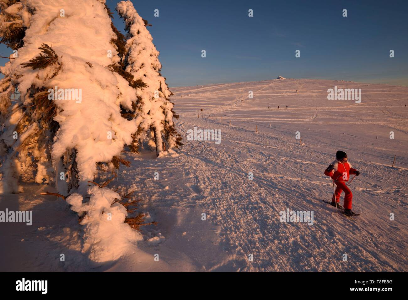 France, Haut Rhin, Hautes Vosges, Le Hohneck (1363 m), summit, spruces, snowshoe hike, sunset, winter, snow - Stock Image