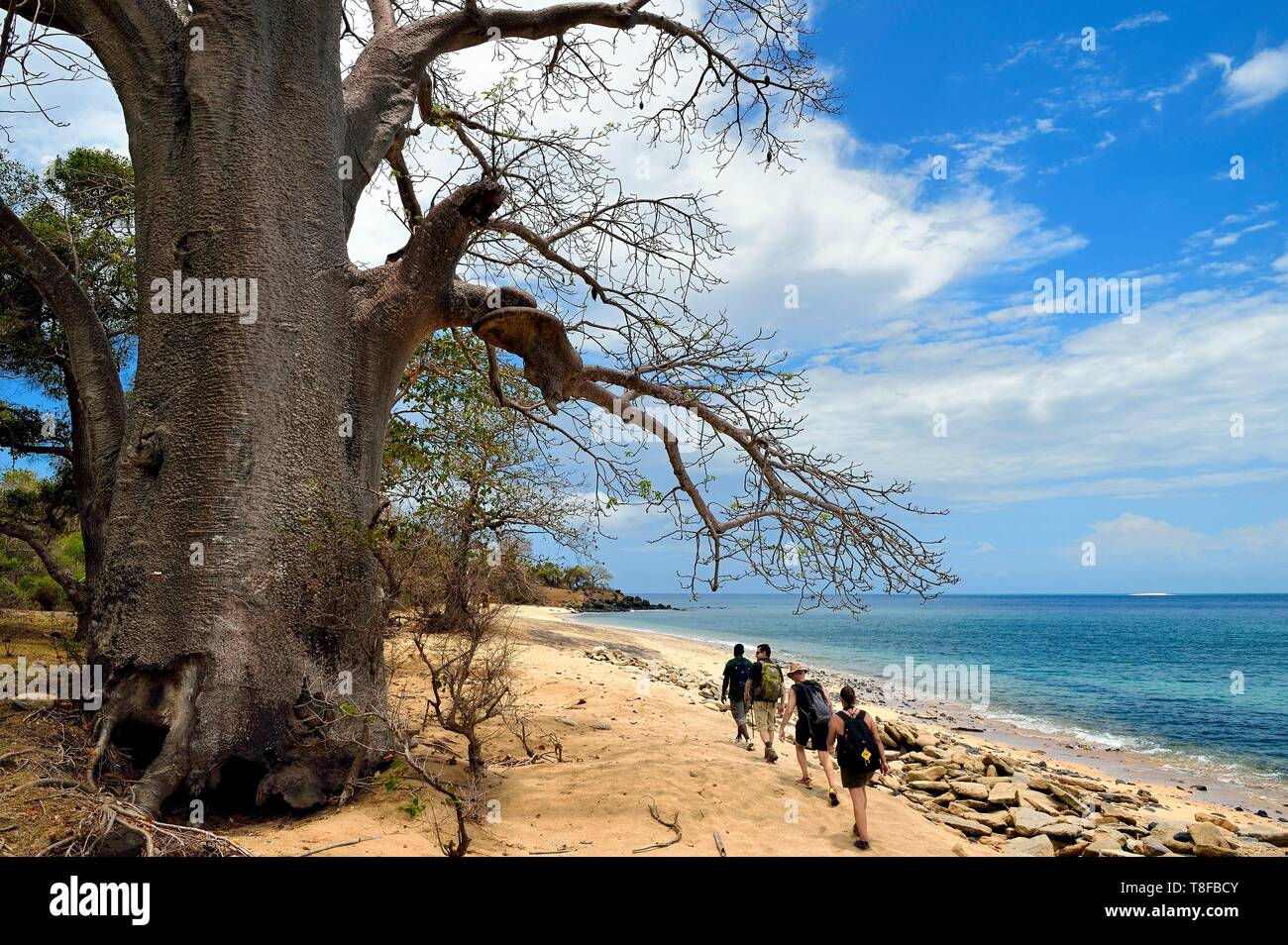 France, Mayotte island (French overseas department), Grande Terre, M'Tsamoudou, Saziley headland, hikers on the long distance hiking trail going around the island, baobab on the beach - Stock Image