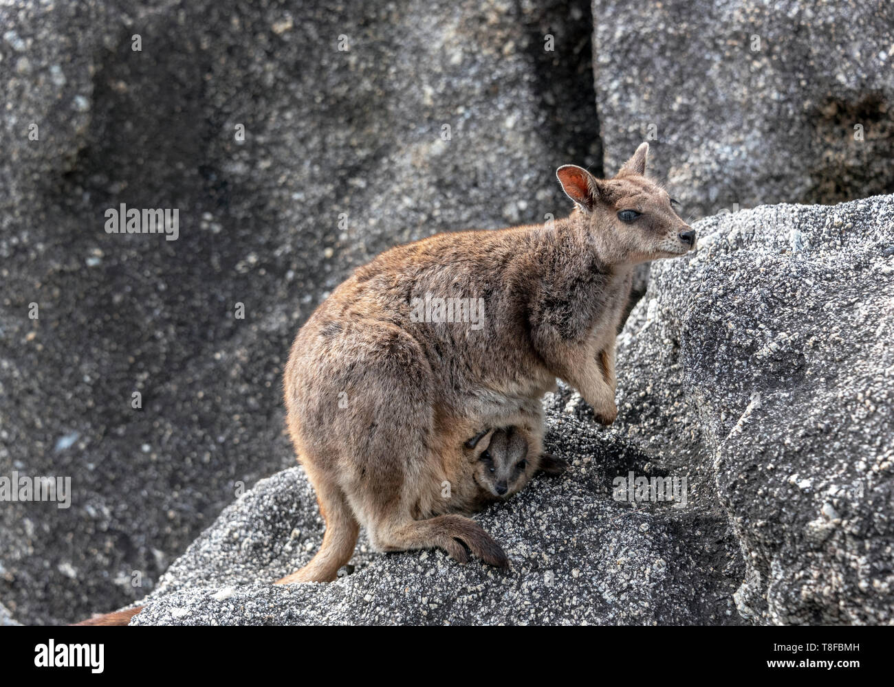 Mother and baby in pouch Stock Photo