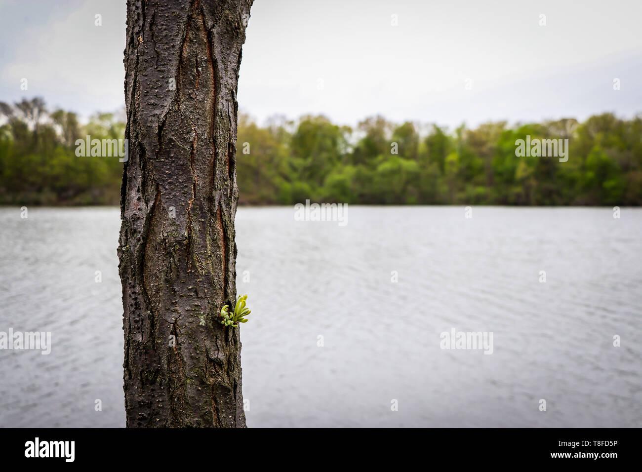 Sprouting Tree at Newburgh Lake Michigan - Stock Image