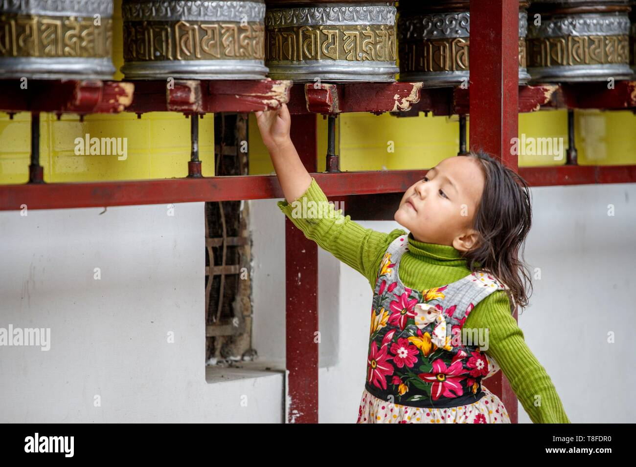 India, state of Jammu and Kashmir, Himalayas, Ladakh, Indus Valley, Leh (3500m), annual Ladakh Festival, Buddhist temple of Gompa Soma (Chokhang), a girl walks around the temple in a clockwise direction while turning the prayer wheels - Stock Image