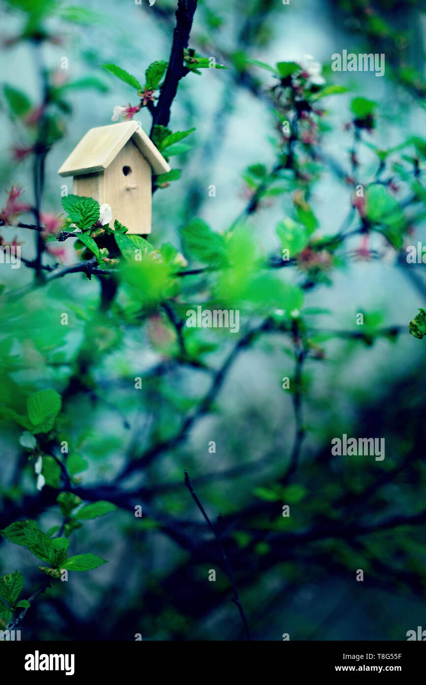 Birdhouse on a blooming tree, tiny nesting box in spring flowers. Creative spring photography with copy space. House buying concept - Stock Image