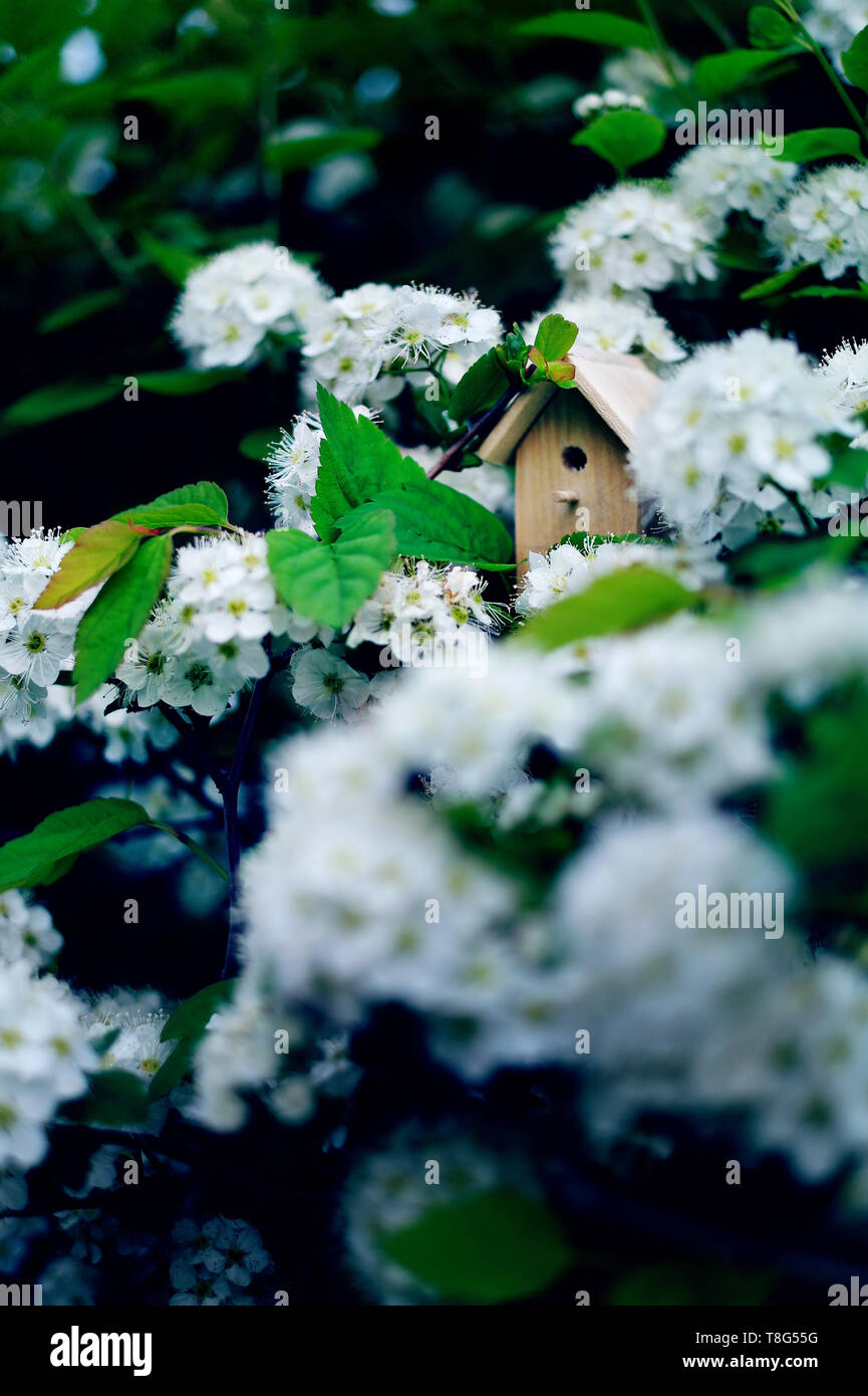 Birdhouse on a blooming bird cherry tree, tiny nesting box in spring flowers. Creative spring photography with copy space - Stock Image
