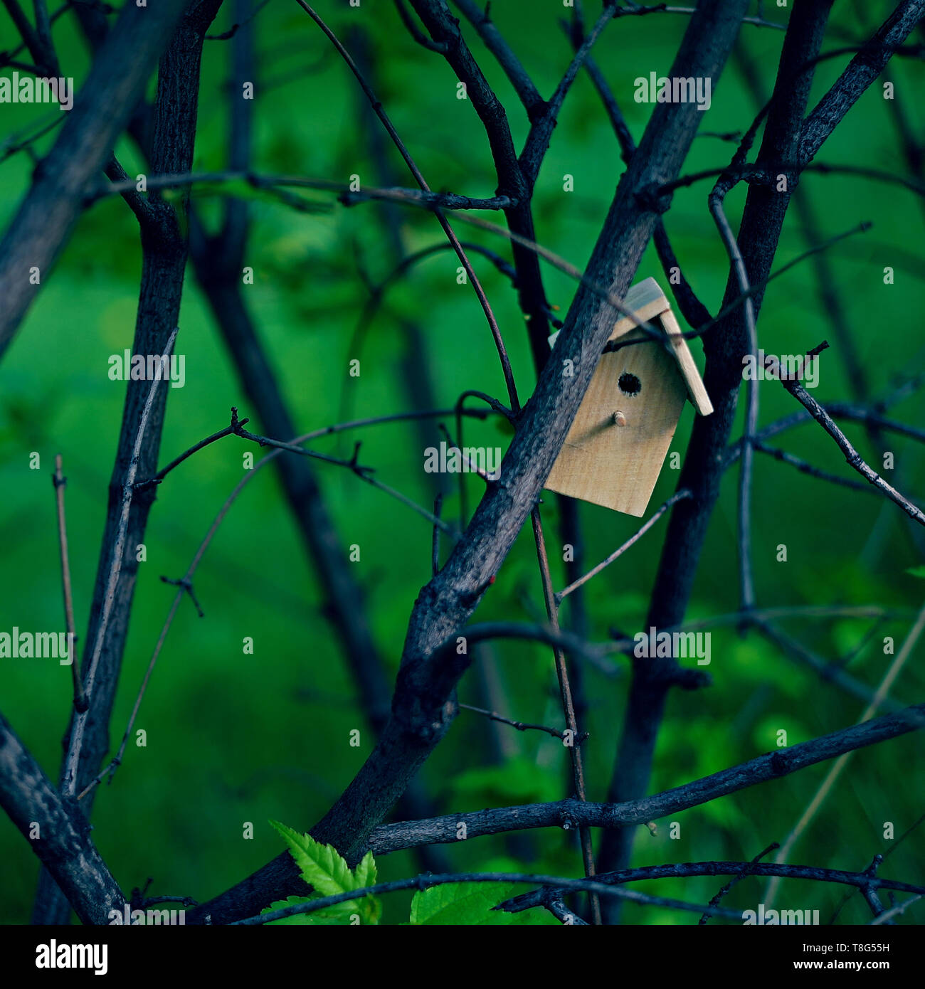 Birdhouse on a tree with fresh leaves, tiny nesting box for a small bird. Creative spring photography with copy space. House buying concept - Stock Image