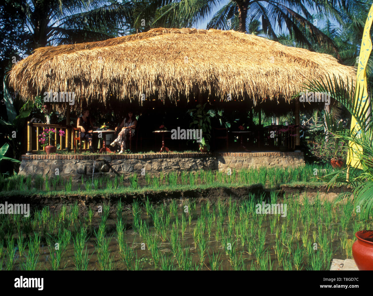 Vietnam: Riceplantation in the Mekong Delta - Stock Image