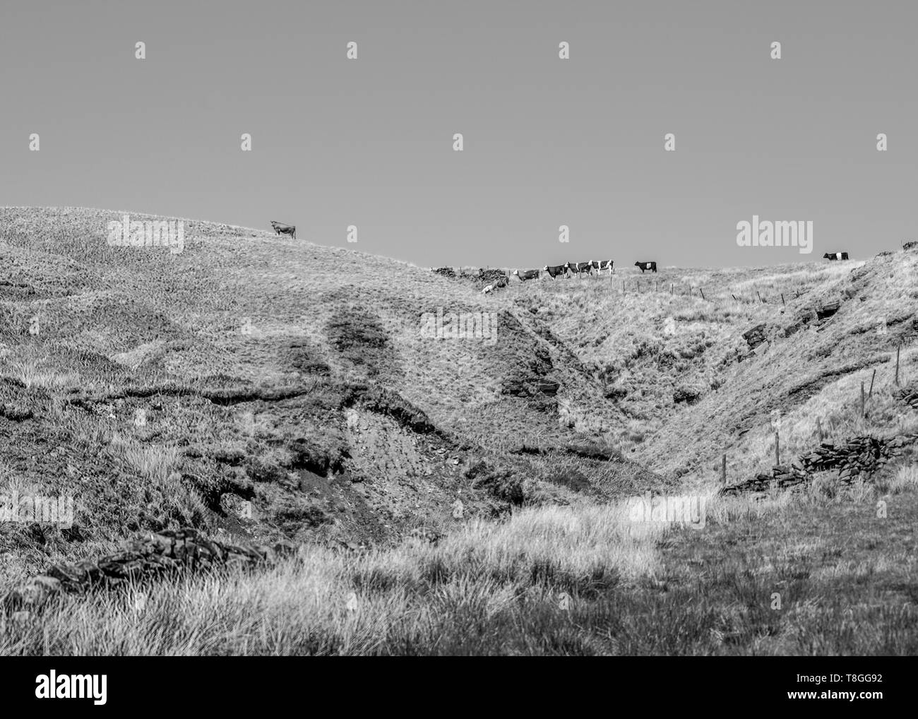 A black and white landscape view of the yorkshire moors against a sunny day