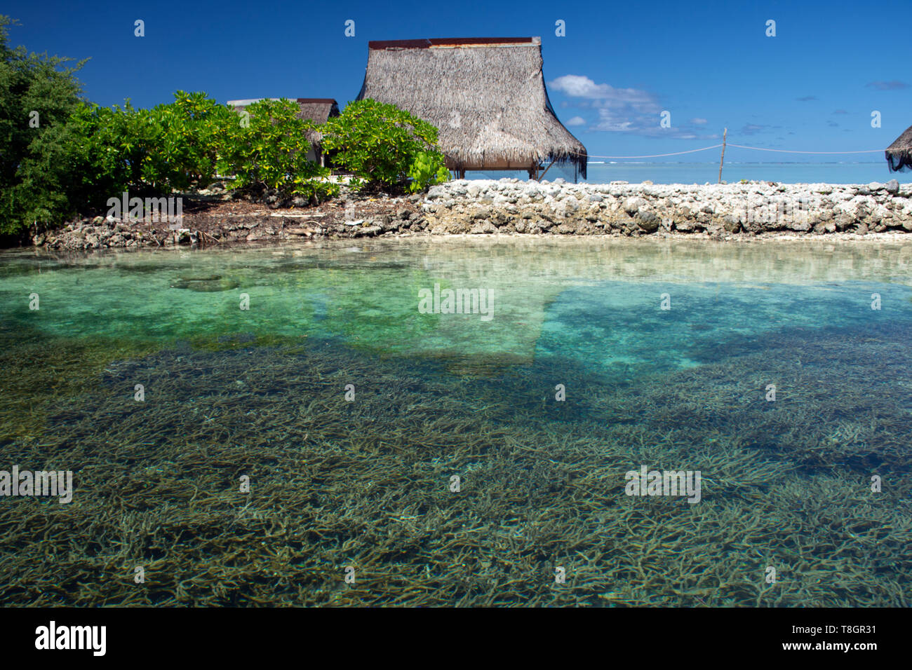 Shallow coral reef, mostly Acropora sp., and typical Micronesian hut in the lagoon of Pohnpei, Federated States of Micronesia - Stock Image