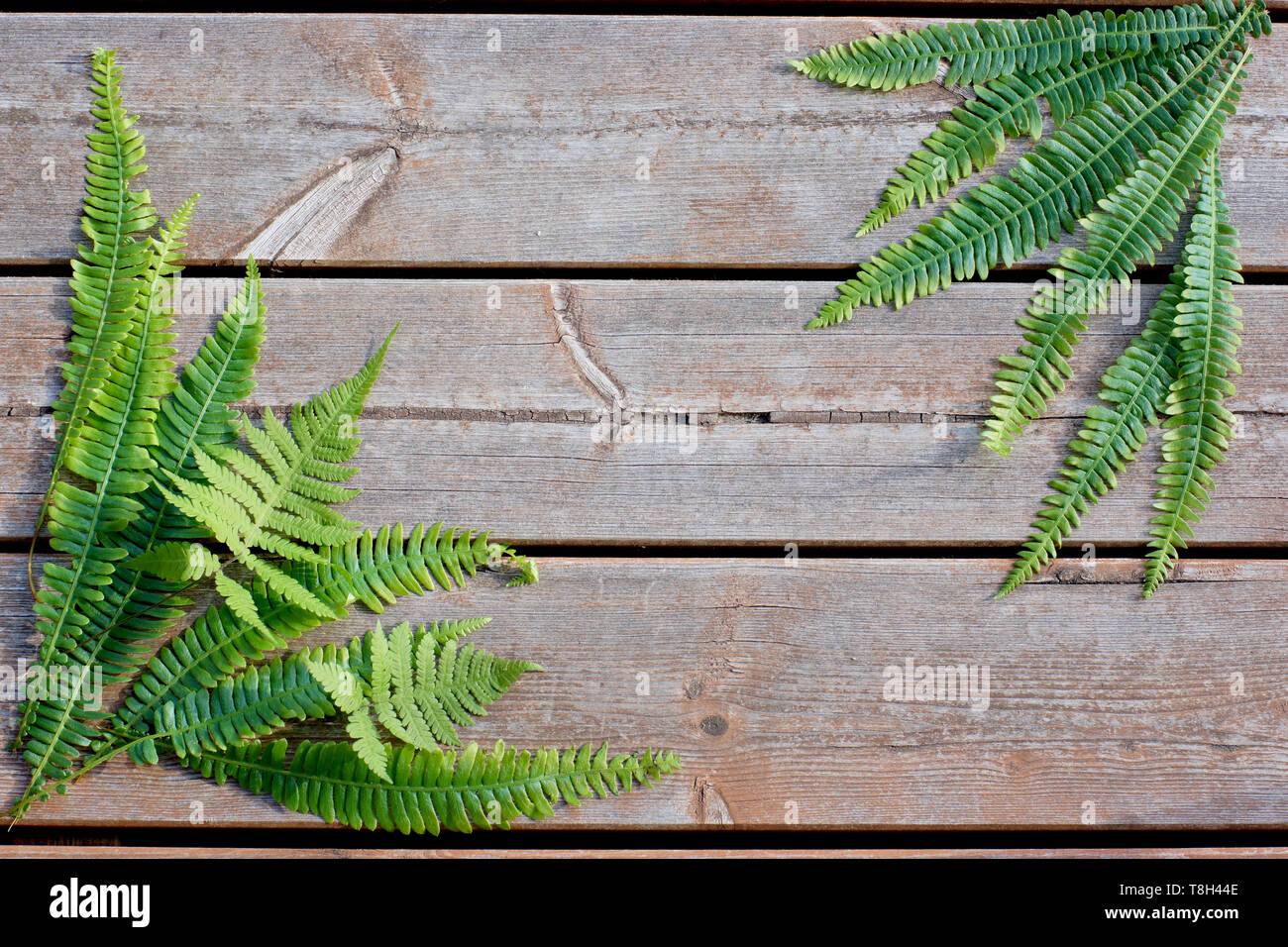 Wooden background with lying green fern branches in the corners diagonally, natural concept - Stock Image
