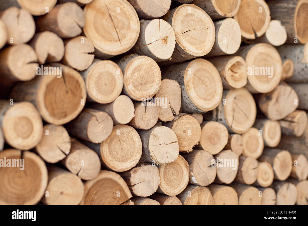 Logs of the tree are located on the wall - Stock Image