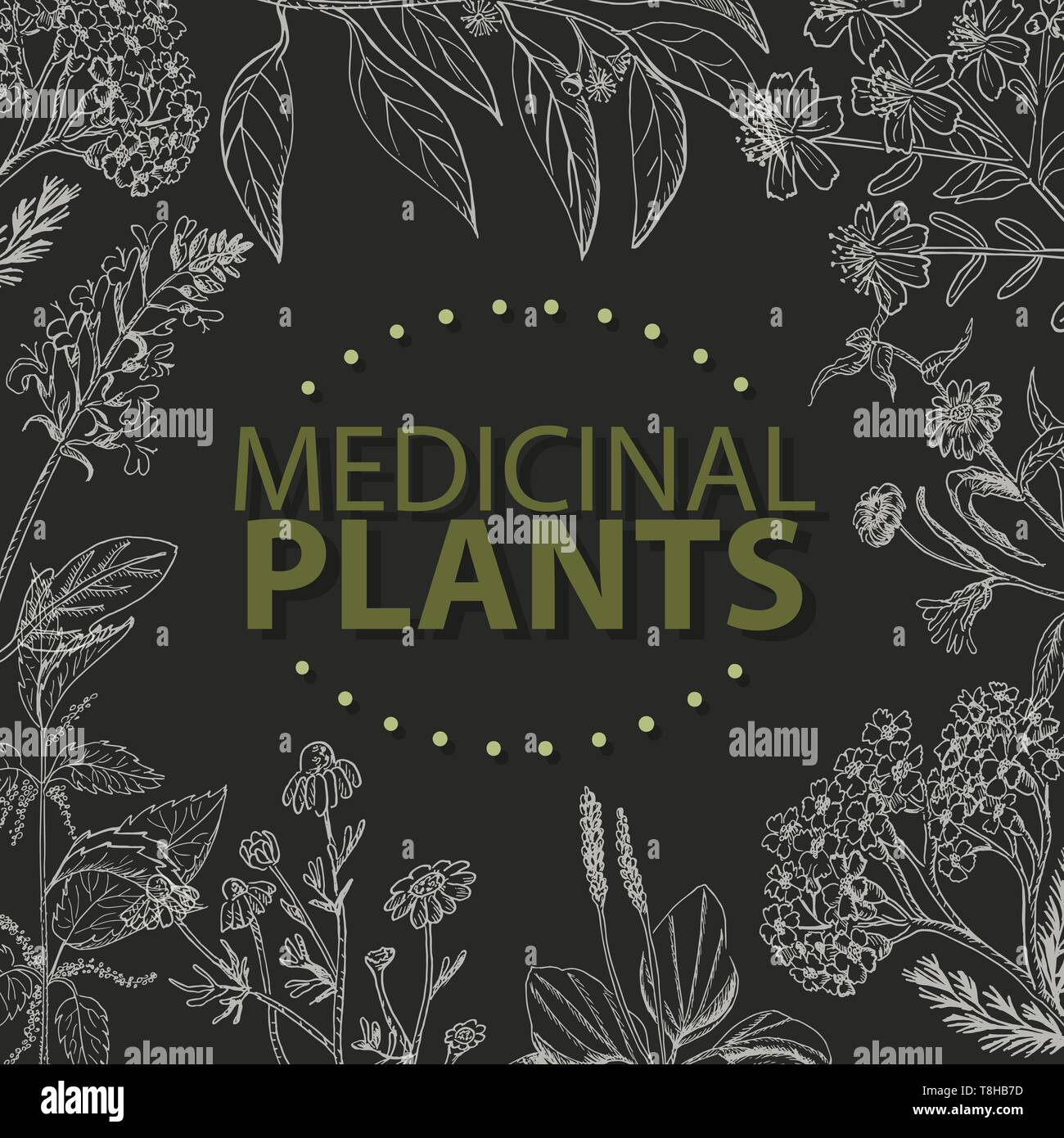Vector background with medical herbs on a black background. Vector  illustration for your design - Stock Vector