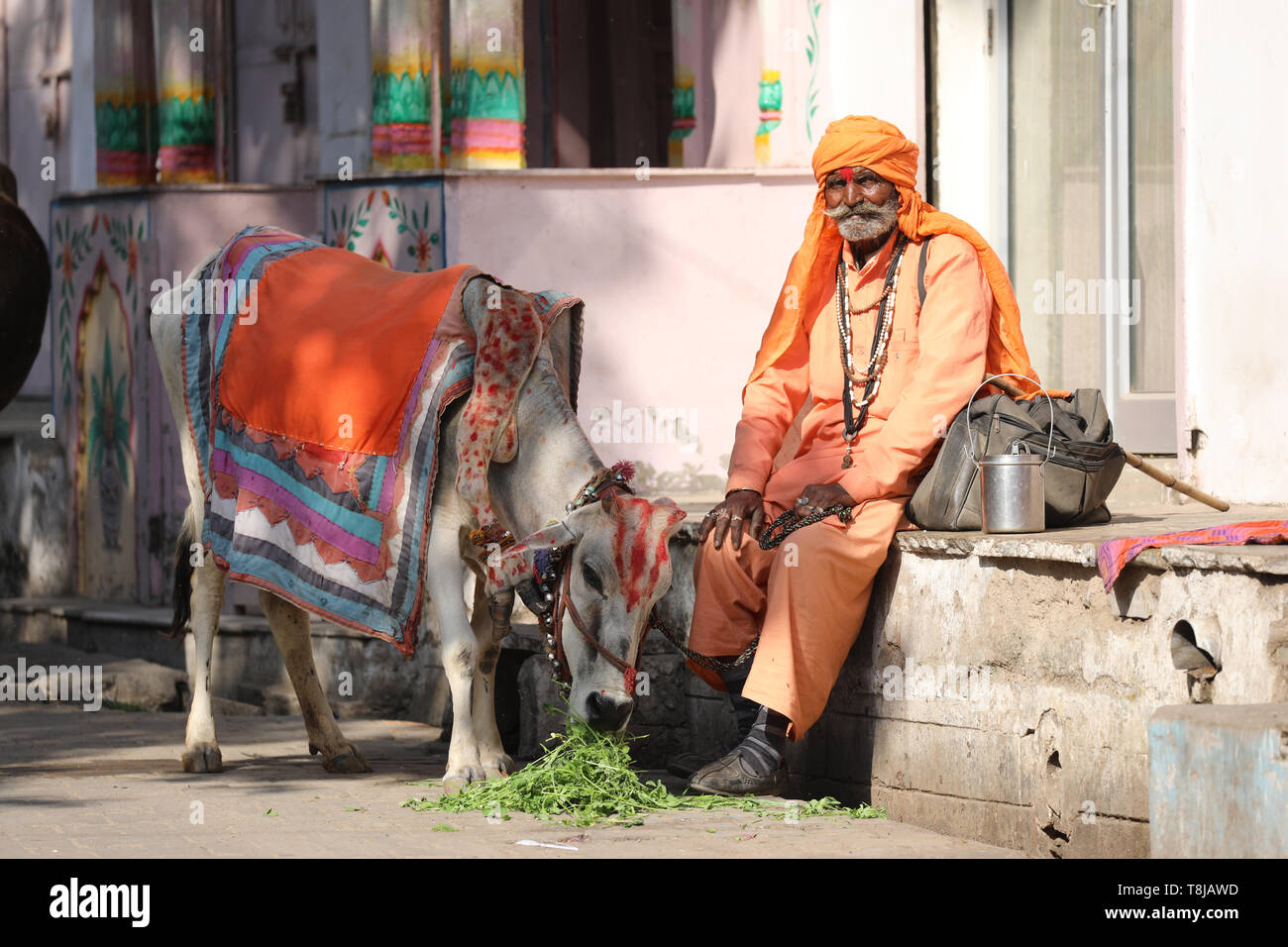 Sadhu with cow sitting on street in Pushkar - Stock Image