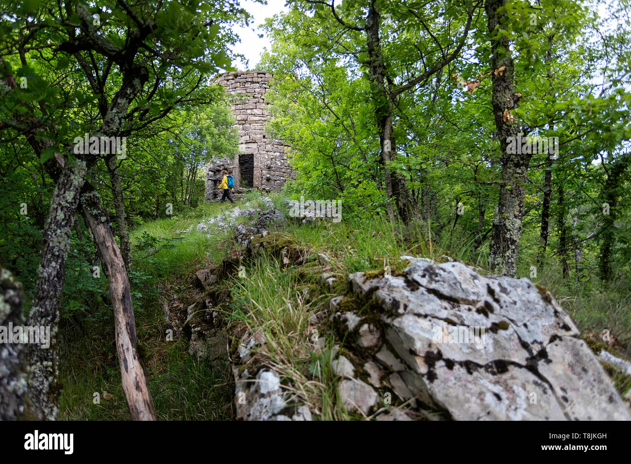 Woman standing by ruins of historic tower in thick green forest. Ruins of old venetian defense stone tower in dense wood. Pasjak, Slovenia - Stock Image