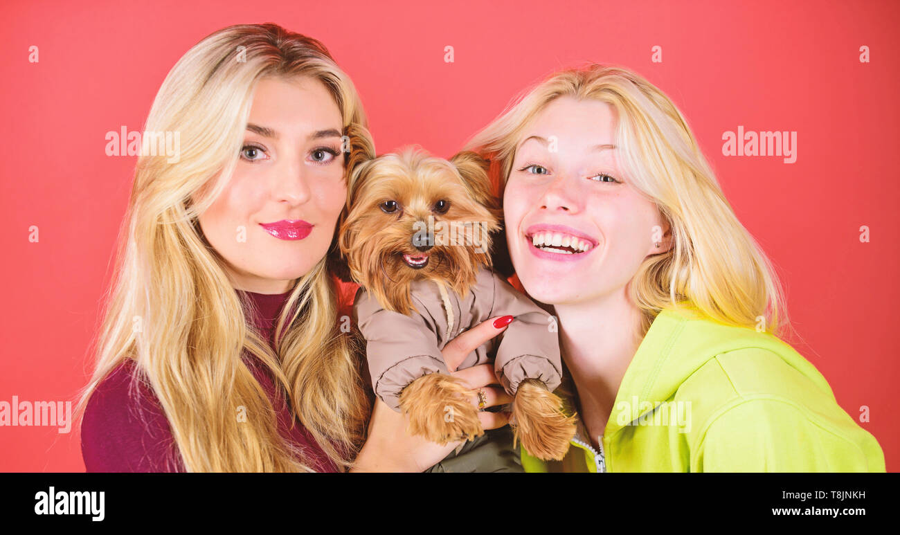 Women hug yorkshire terrier. Yorkshire terrier is very affectionate loving dog that craves attention. Cute pet dog. Yorkshire Terrier breed loves socialization. Blonde girls adore little cute dog. - Stock Image