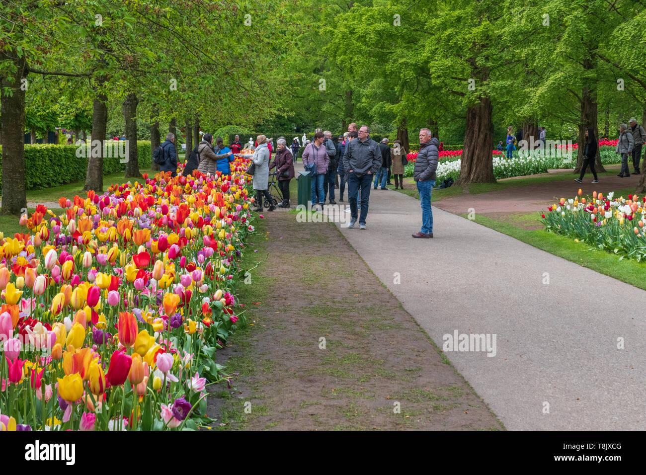 Keukenhof Gardens tourists - Lisse Netherlands - tourism tulips - multi-colored tulip flower beds - tulip flowers - Stock Image