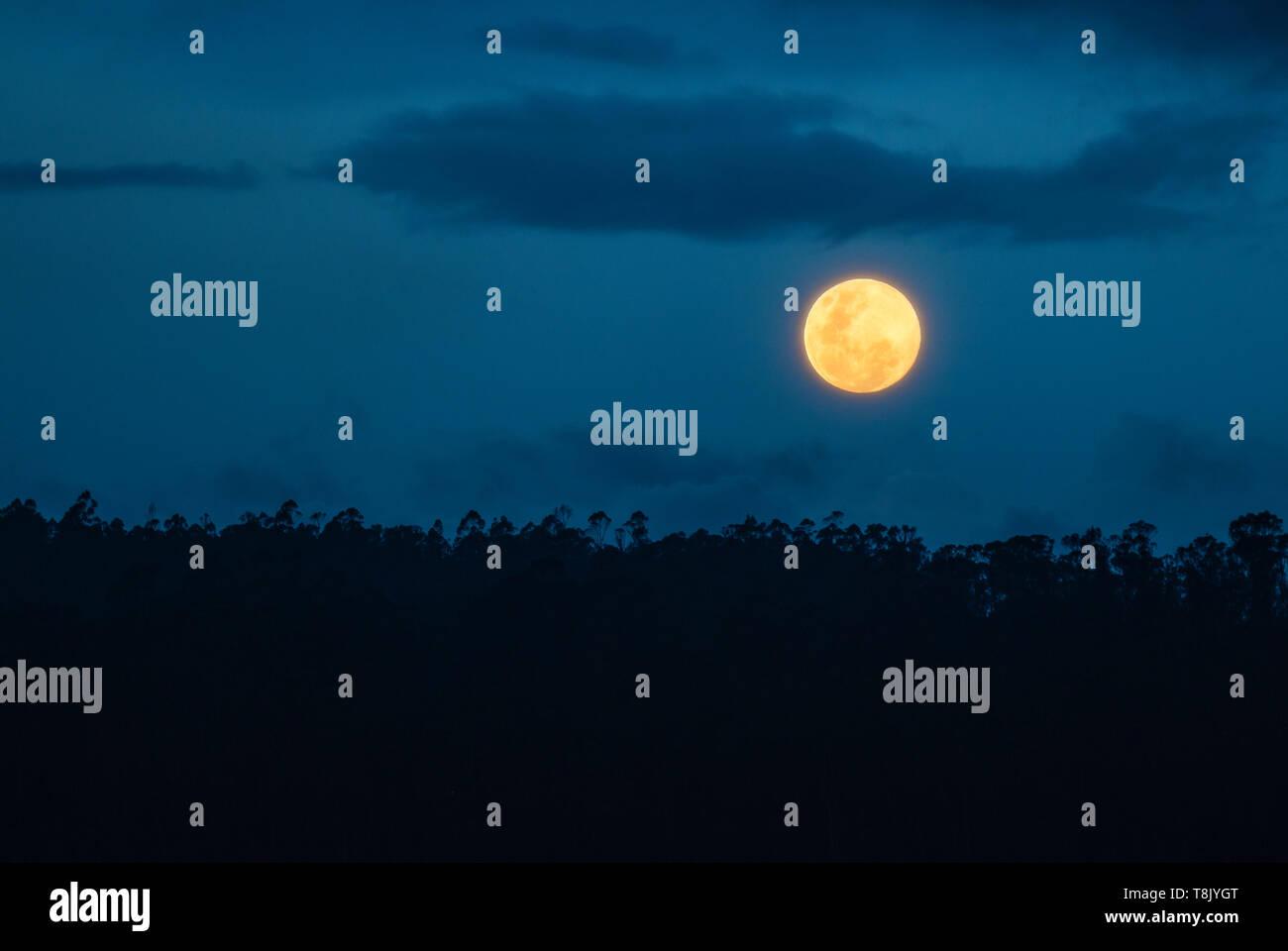 Full moon rising, Amazon Rainforest. The Amazon river comprises the countries of Brazil, Bolivia, Colombia, Ecuador, Guyana, Suriname, Peru, Venezuela. - Stock Image