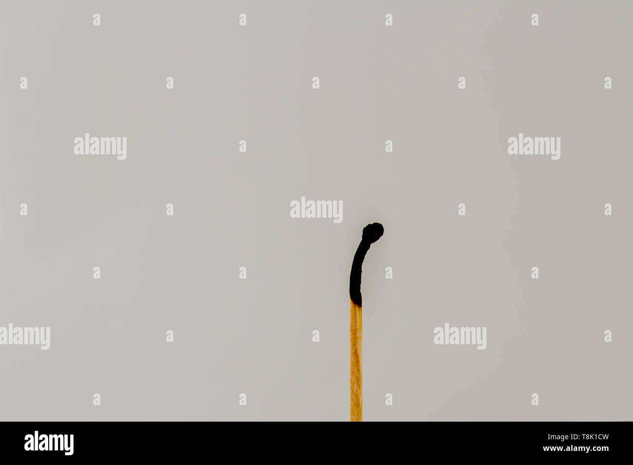 A burnt out match isolated against a clear background image with copy space in landscape format - Stock Image