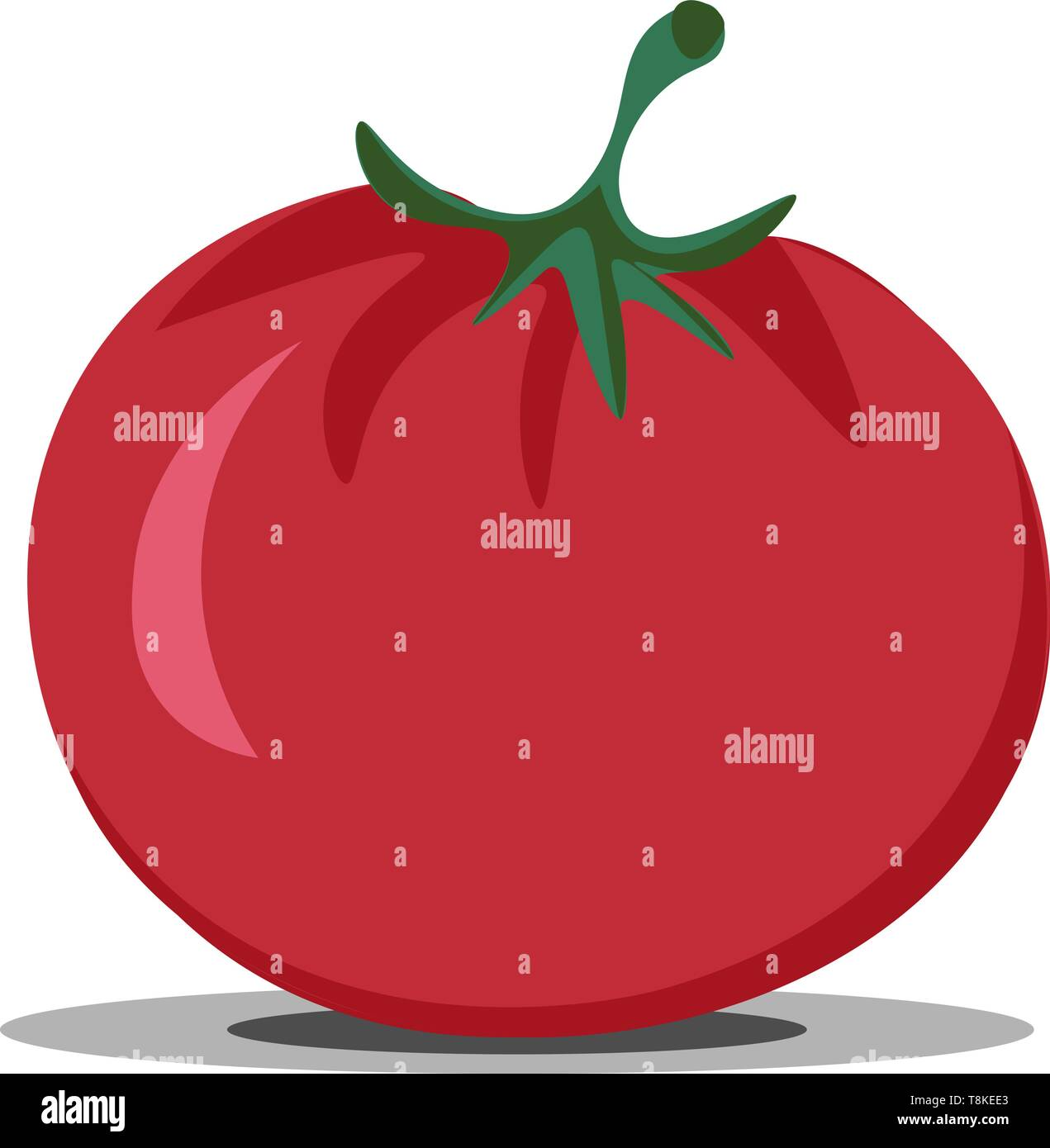 Clipart of the shiny and glossy, short, round and stout, fresh juicy tomato topped with a green stalk is in the ripened stage and ready to get into sa - Stock Vector