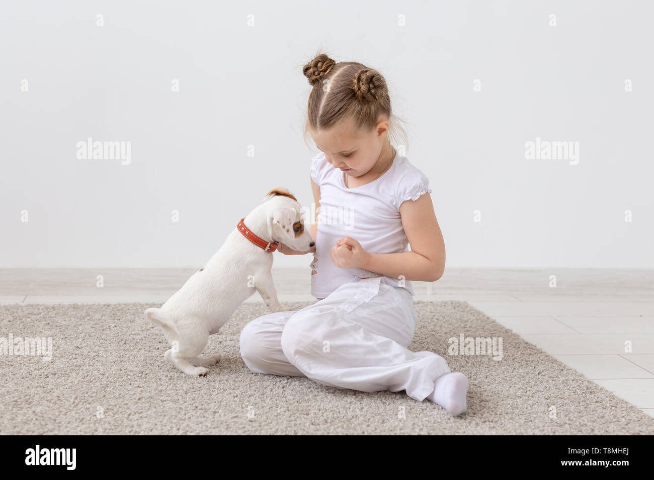 Pets and animal concept - Child girl playing with puppy Jack Russell Terrier - Stock Image