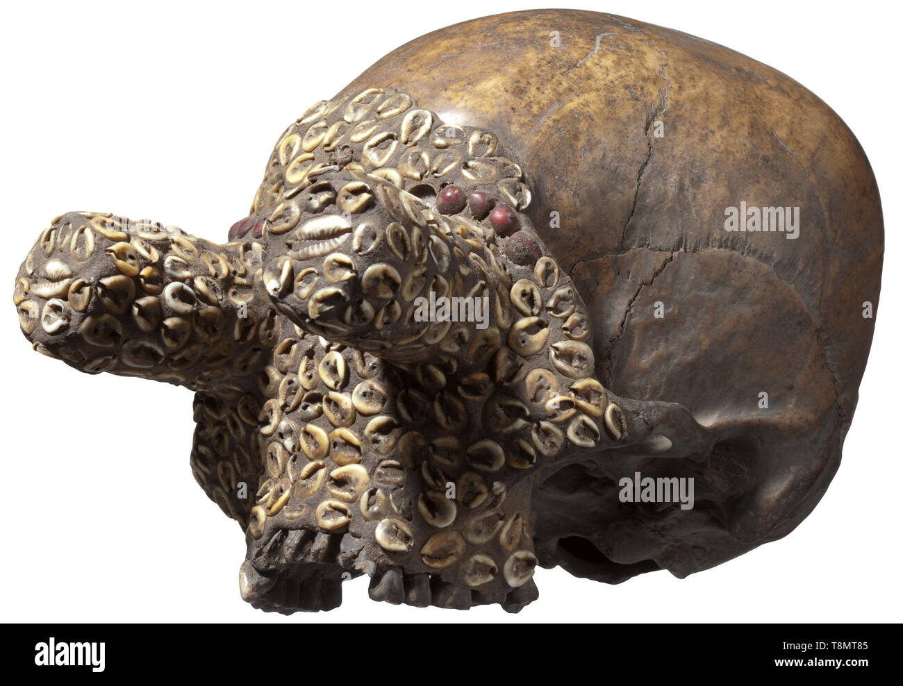 Human Skull Front Stock Photos & Human Skull Front Stock Images - Alamy