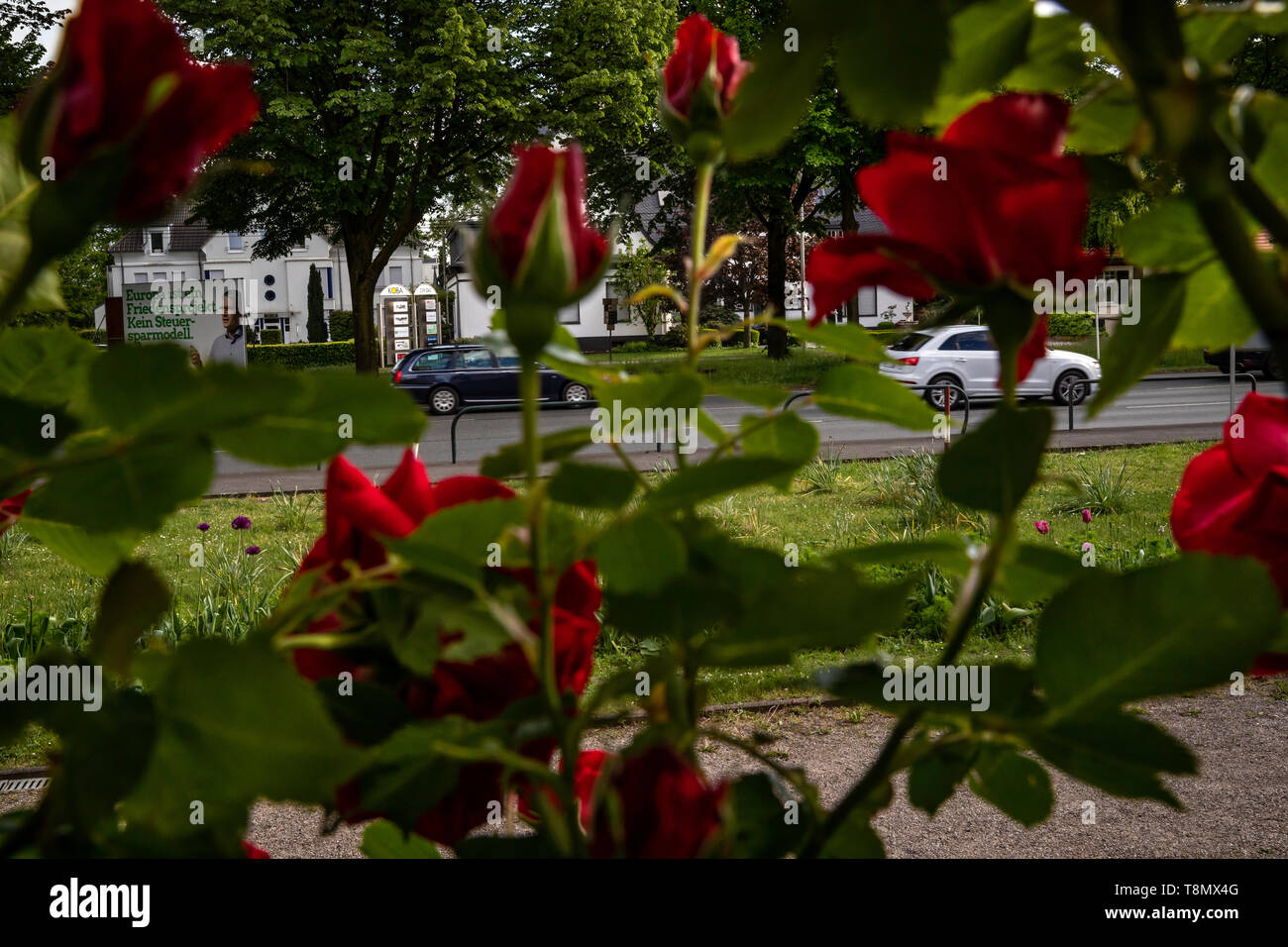 Views through roses onto the Bundesstrasse 1 in Dortmund - Stock Image