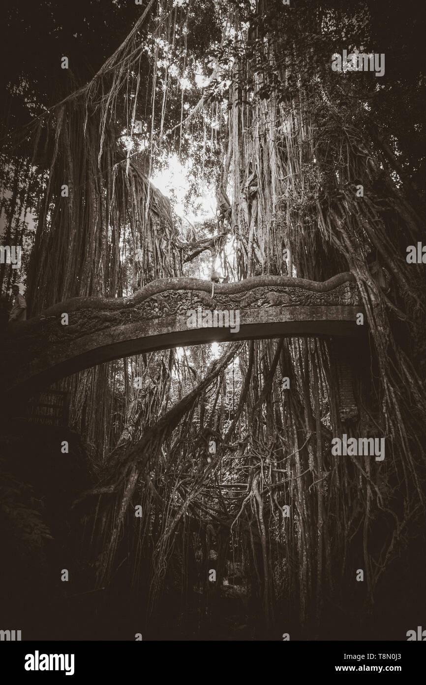 Old bridge in the sacred Monkey Forest, Ubud, Bali, Indonesia - Stock Image