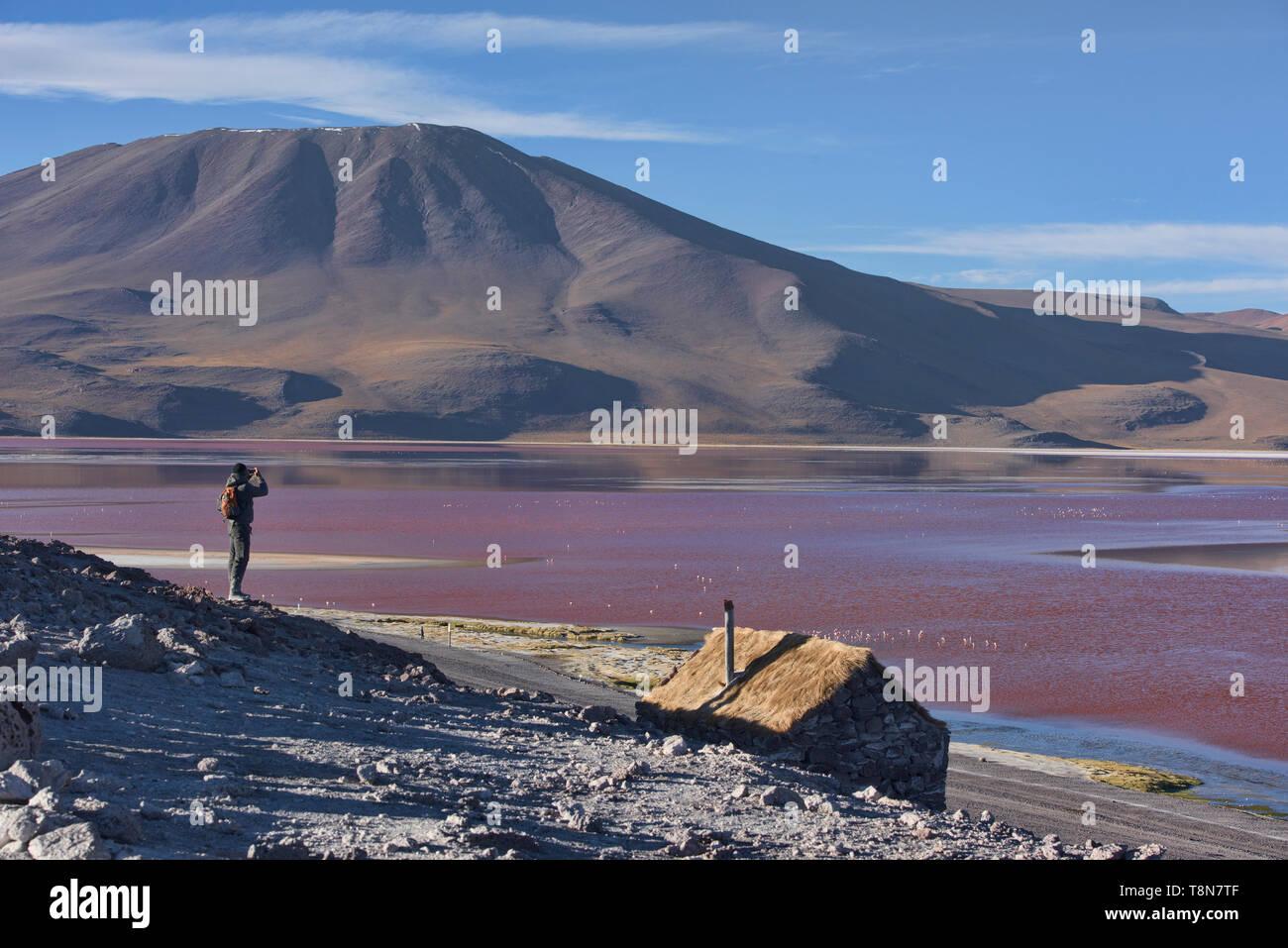 A flamboyance of James's, Andean, and Chilean flamingos on Laguna Colorada, Salar de Uyuni, Bolivia Stock Photo
