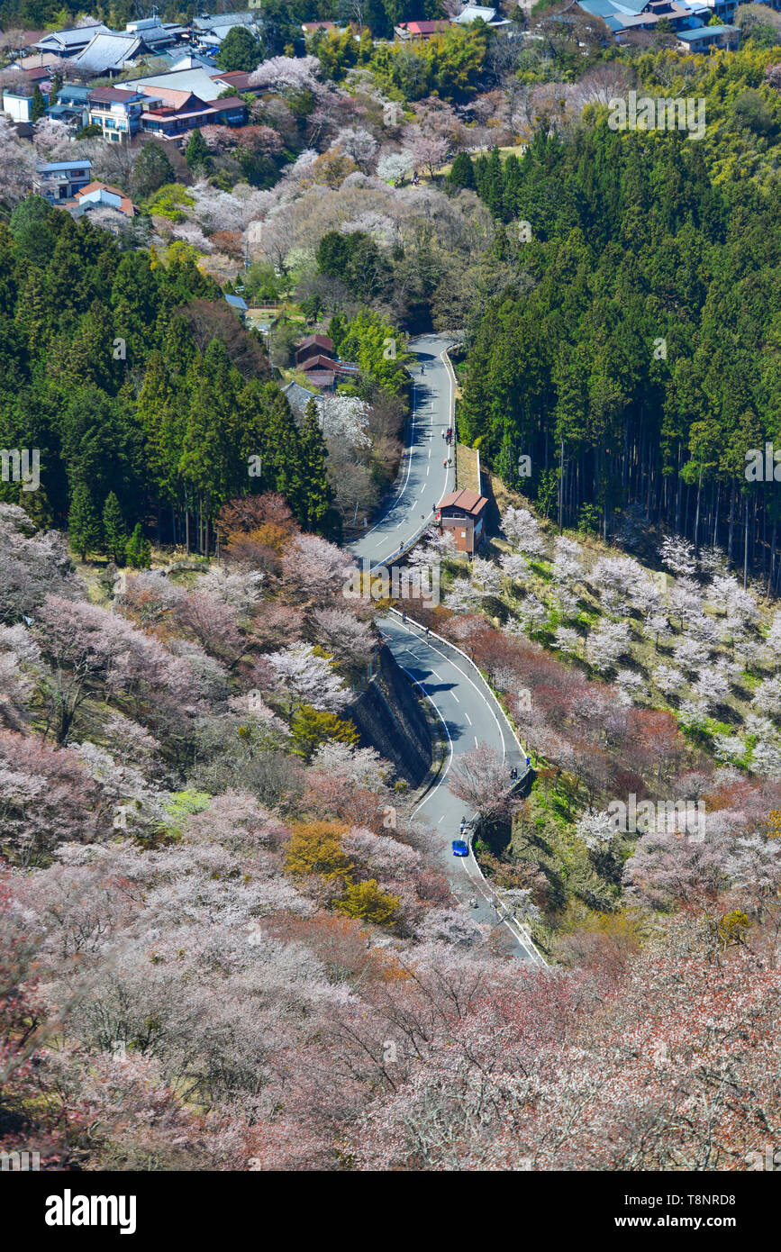 Yoshino Mountain covered by full blossom cherry trees at sunny day in Nara, Japan. - Stock Image