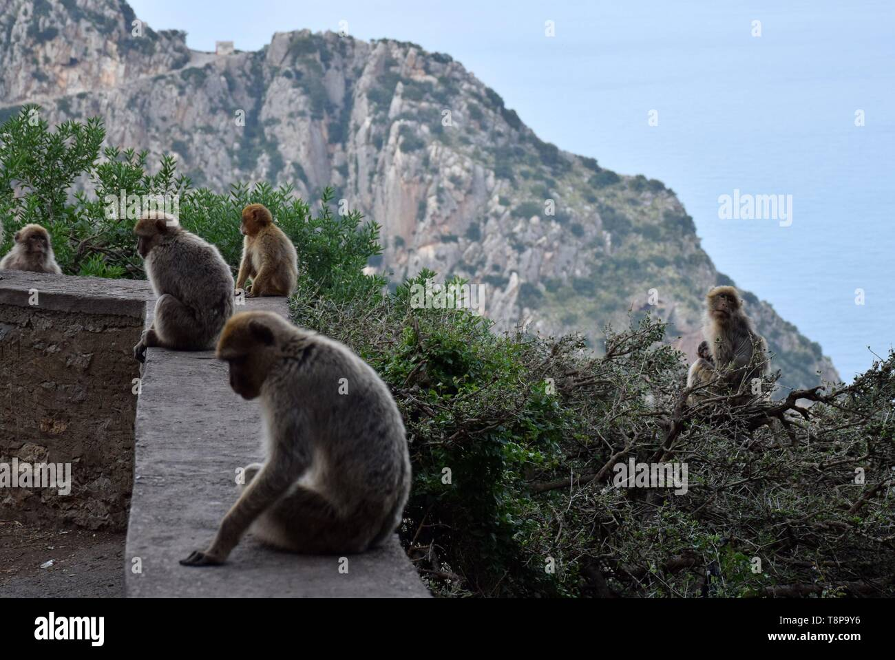 The viewpoint Cap Carbon with monkeys on 02.04.2019 near the port of Bejaia - Algeria. | usage worldwide Stock Photo