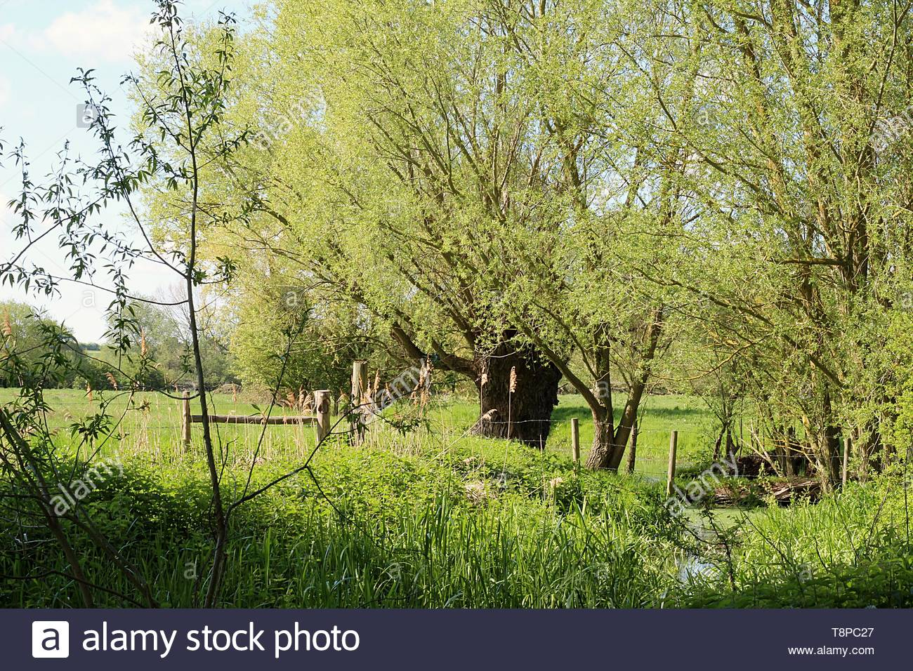 a warm spring day among the trees in rural East Anglia - Stock Image
