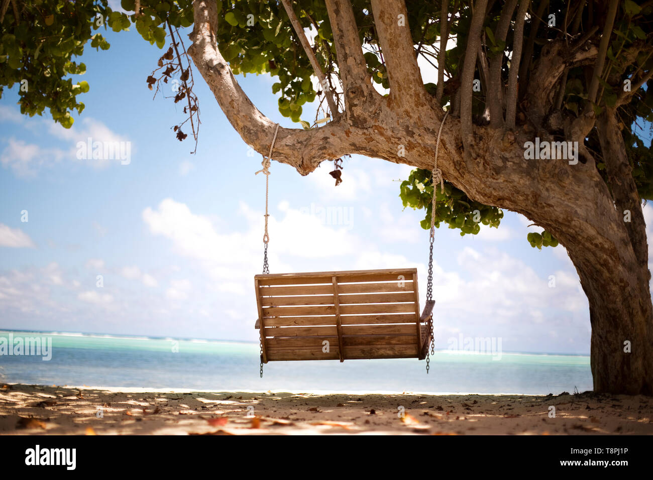 Remarkable Wooden Bench Swing Hangs From A Tree Facing The Ocean Stock Caraccident5 Cool Chair Designs And Ideas Caraccident5Info