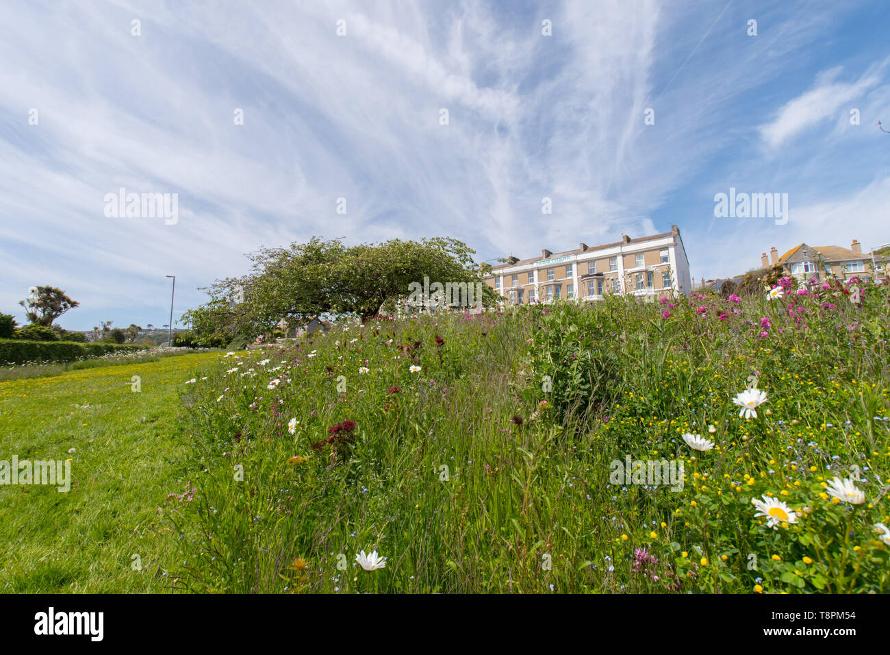 Wherrytown, Cornwall, UK. 14th May 2019. UK Weather. Wild flowers were in bloom in the May sunshine near Newlyn. The green space is one that has benefited from EU part funding in Cornwall Councils 'Green Infrastructure for Growth' initiative. Credit Simon Maycock / Alamy Live News. - Stock Image