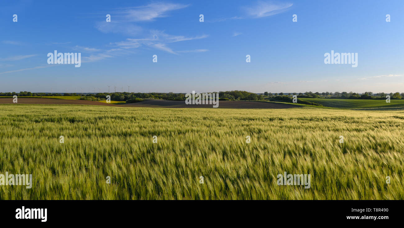 Mallnow, Germany. 14th May, 2019. The low evening sun shines over wide fields and fields in the district Märkisch-Oderland. Credit: Patrick Pleul/dpa-Zentralbild/ZB/dpa/Alamy Live News - Stock Image