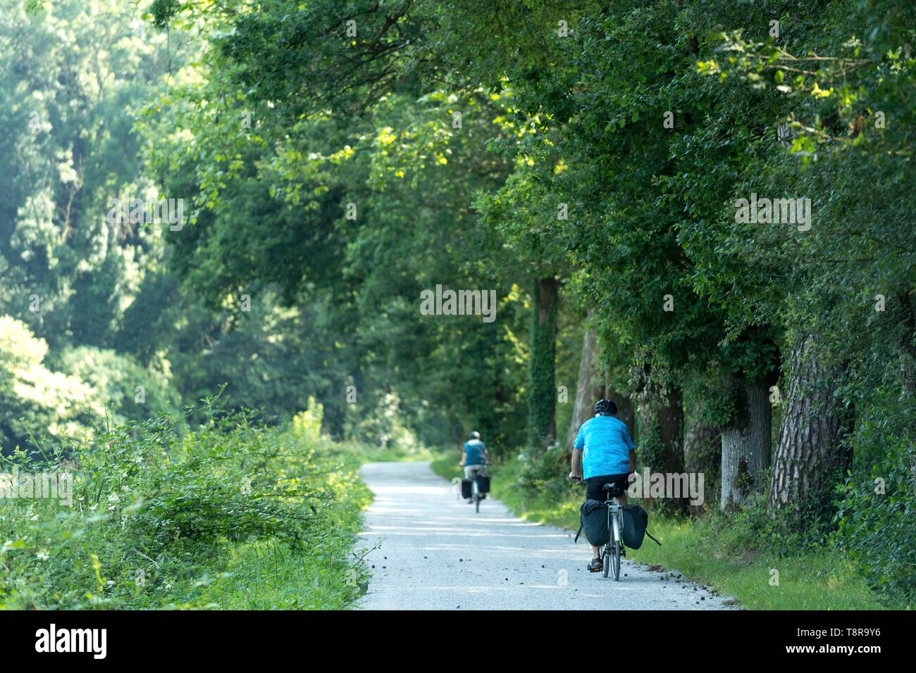 France, Morbihan, Pluméliau-Bieuzy, tcyclist on the towpath along the canal from Nantes to Brest near the village of Saint-Nicolas-des-eaux - Stock Image