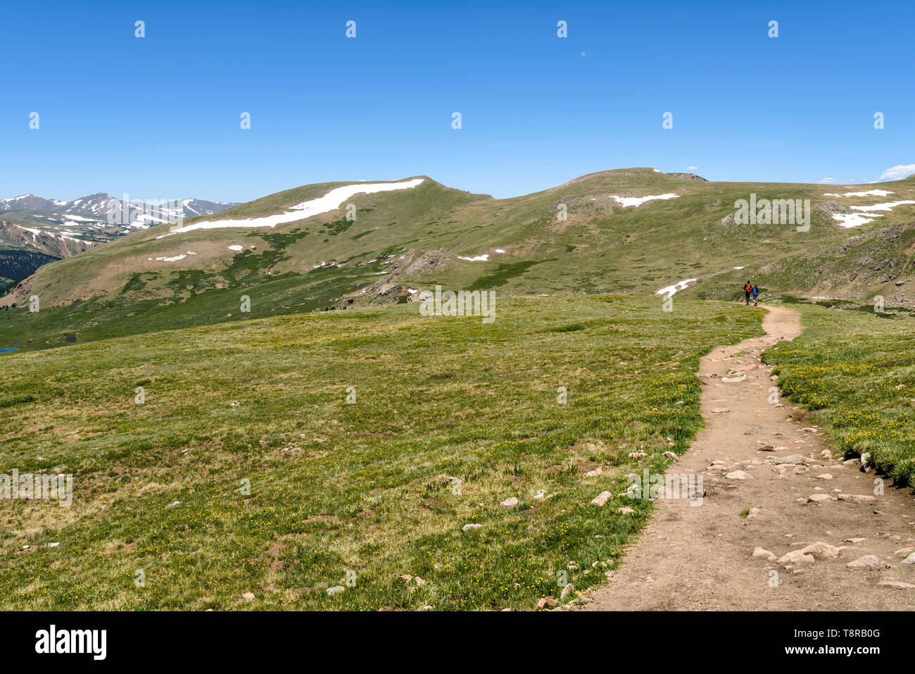 Hiking in Spring Mountains - A hiking trail winding through a meadow at hilltop in Front Range of Rocky Mountains, Colorado, USA. - Stock Image