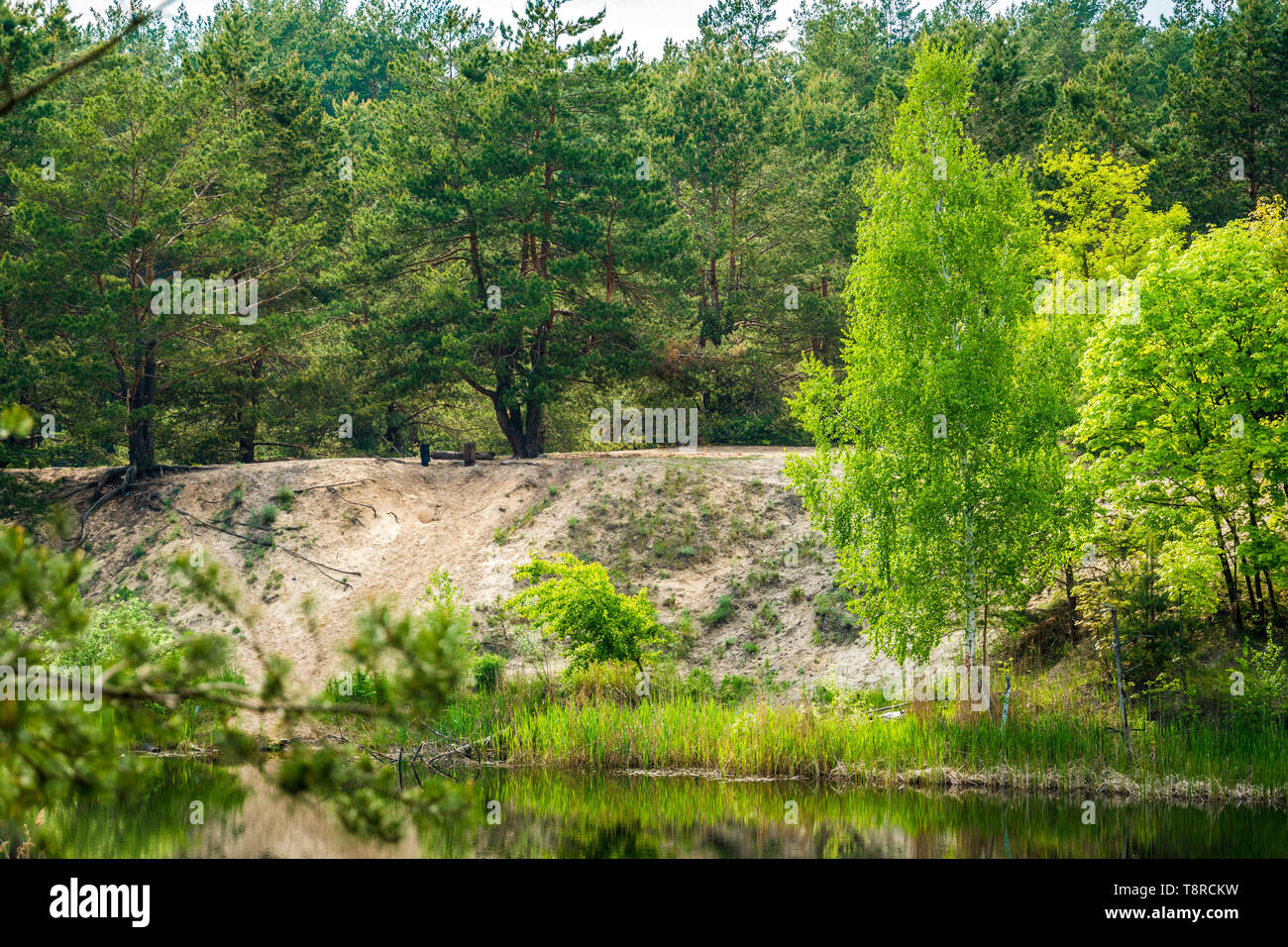 Green shore of the small lake. A small summer calm lake, pine forest and young deciduous trees on the shore. - Stock Image