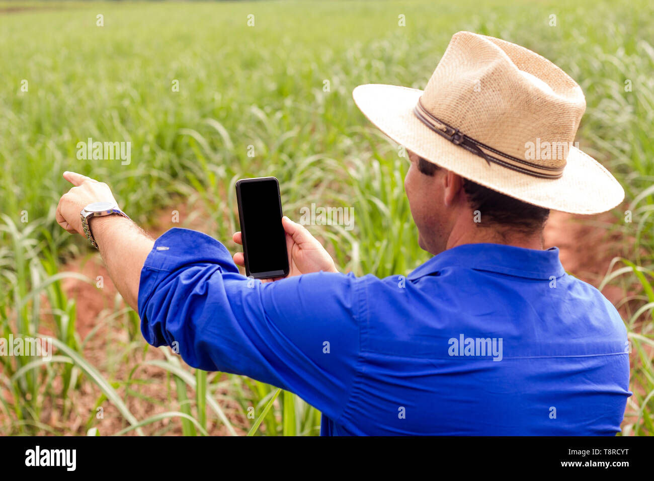 A farmer seen in a field of sugar cane with his smartphone. Brazil became a model of diversification of the use of sugar cane as a raw material, manufacturing varied products from the plant. Agriculture in Brazil is one of the main bases of the country's economy. Agriculture is an activity that is part of the primary sector where the land is cultivated and harvested for subsistence, export or trade. Stock Photo