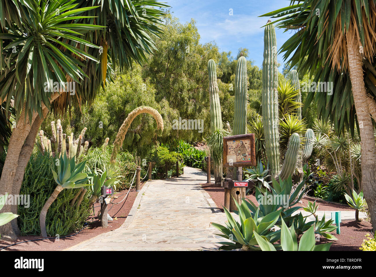 LANZAROTE, CANARY ISLANDS, SPAIN - APRIL 15, 2019: High cacti, palm trees and other tropical vegetation against a blue sky. Themed Rancho Texas Park o Stock Photo