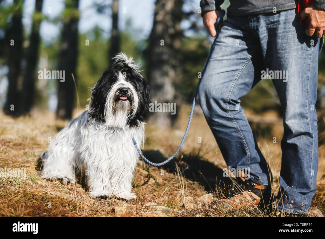 Active man have fun outdoor with Tibetan terrier dog in forest, selective focus - Stock Image