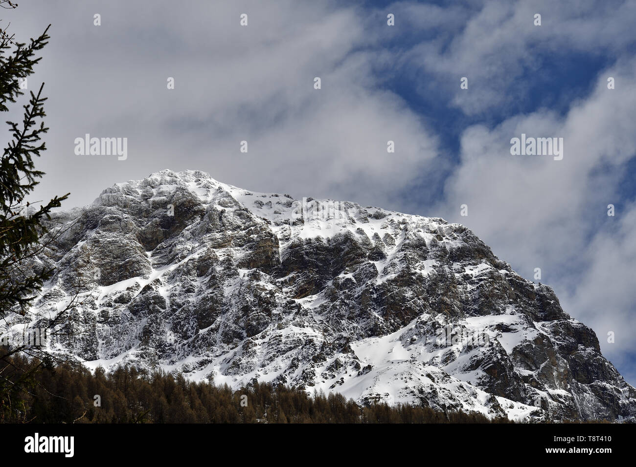 Larch and pine trees are frame to the mountain called Monte dell'Oro in Malenco Valley - Stock Image