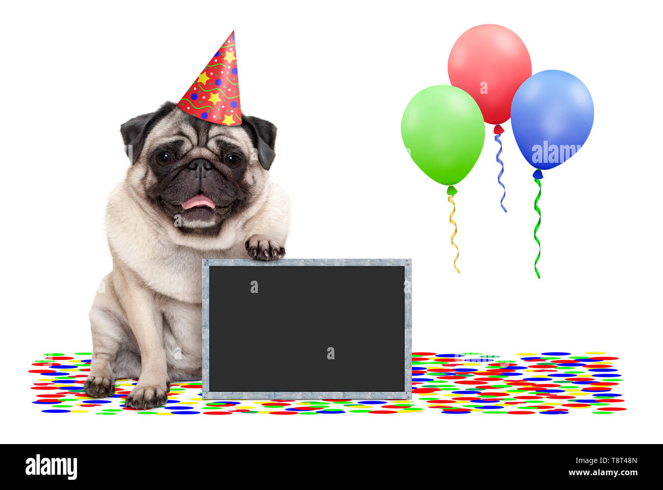 frolic smiling birthday party pug dog, with blackboard, confetti and balloons decoration, isolated on white background Stock Photo
