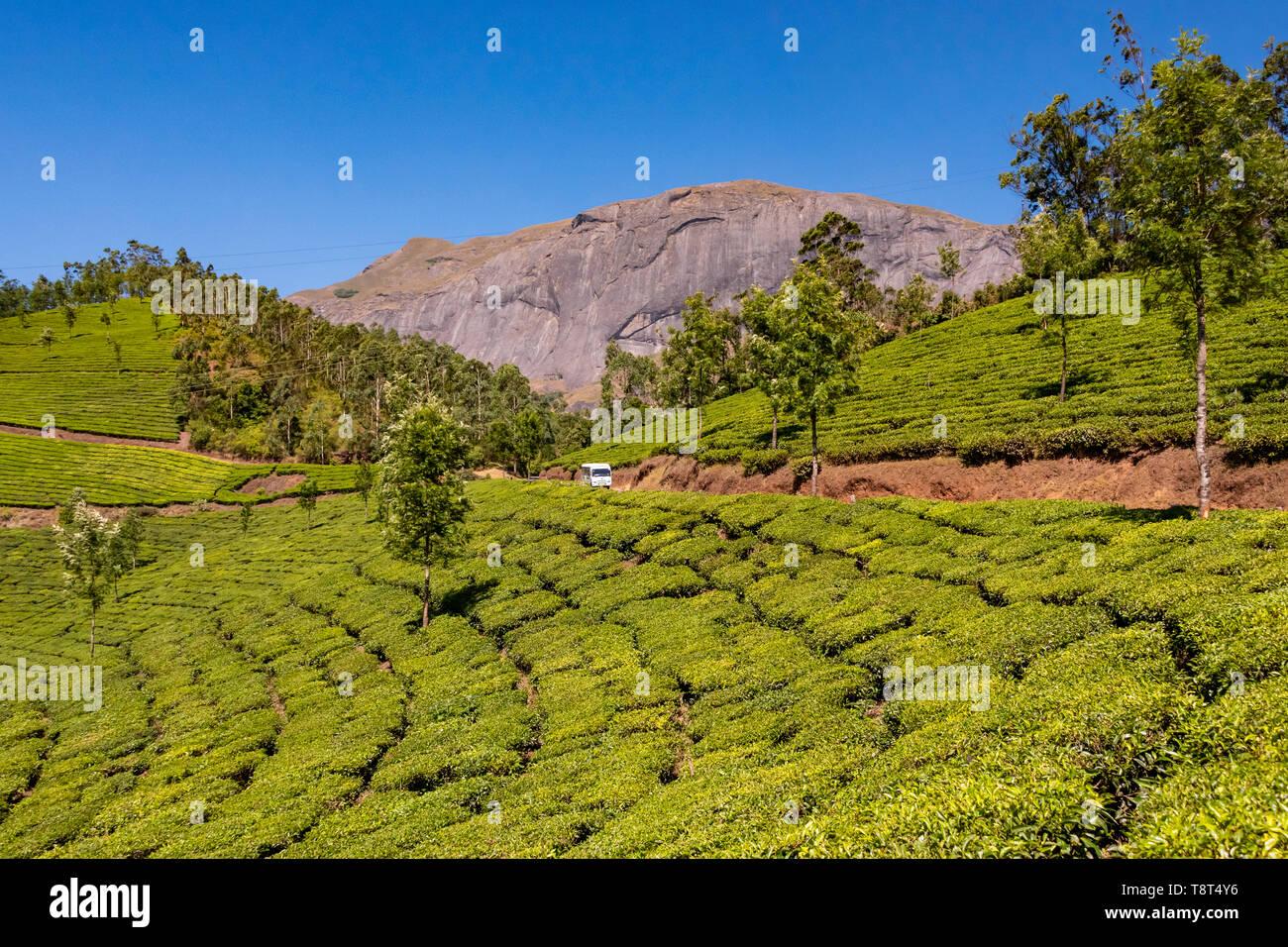 Horizontal view of Anamudi peak with the tea plantations in Eravikulam National Park in Munnar, India. Stock Photo