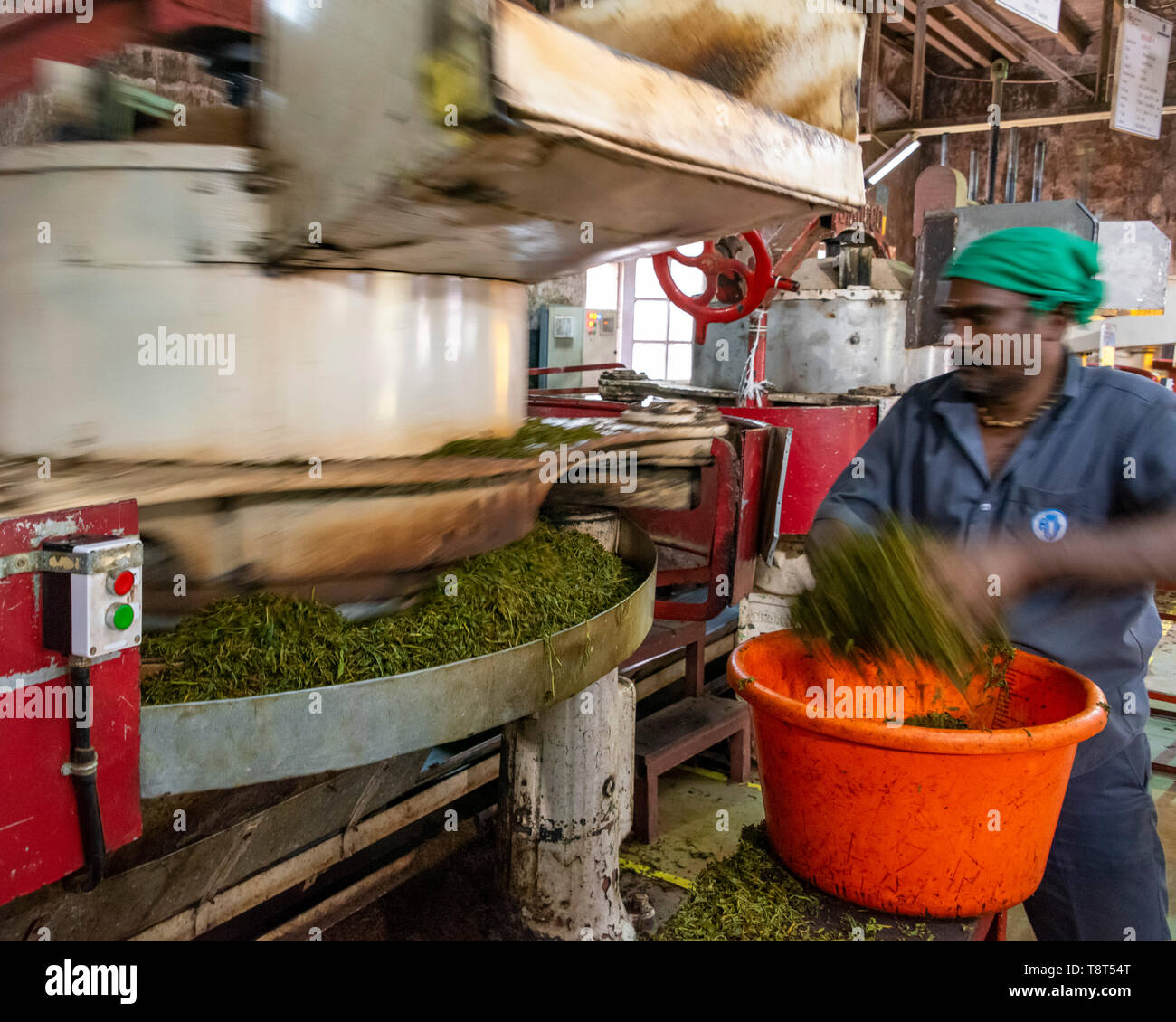 Horizontal view of a worker at a tea factory in Munnar, India. Stock Photo
