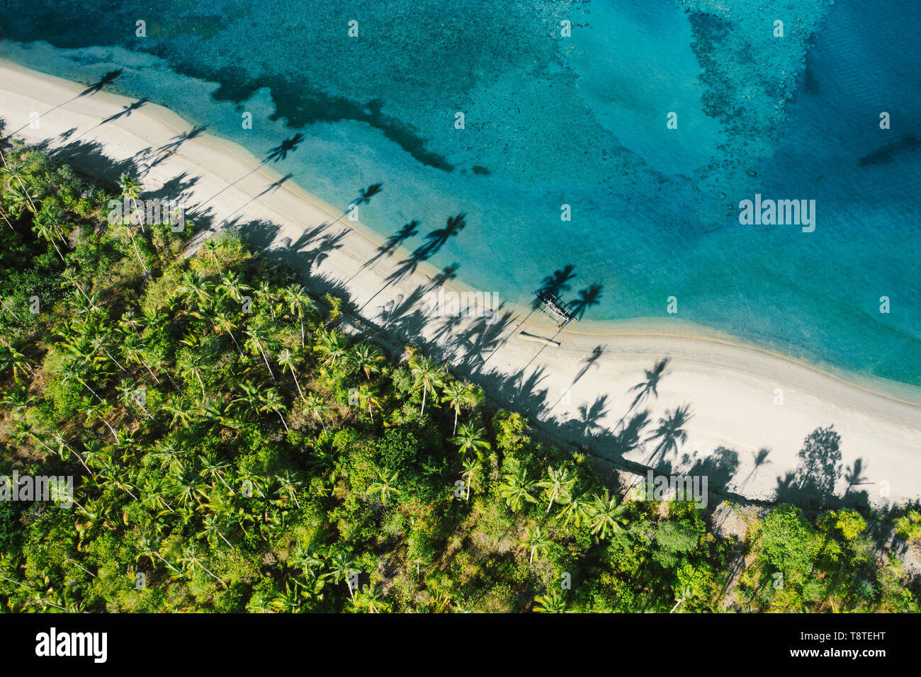 Top down view of tropical landscape with palm trees silhouettes Stock Photo