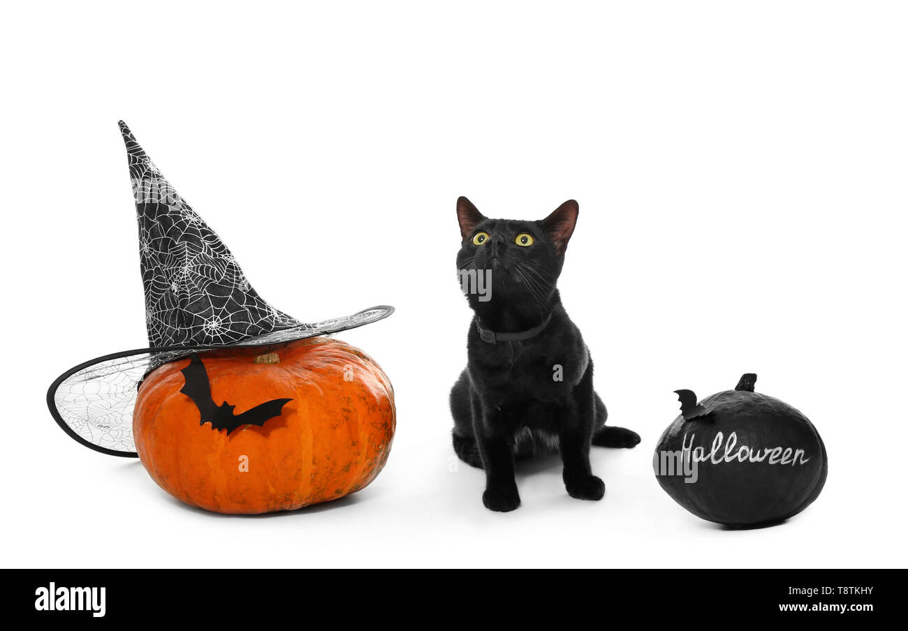 73f2c782 Cute black cat and Halloween pumpkins on white background Stock ...